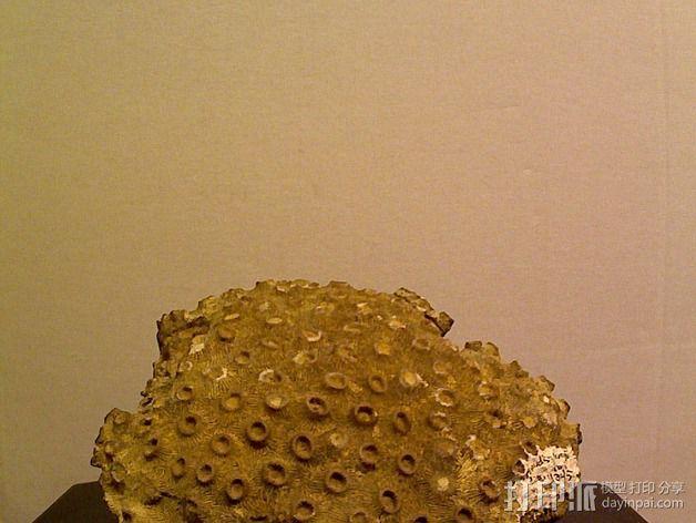 珊瑚模型 3D模型  图2
