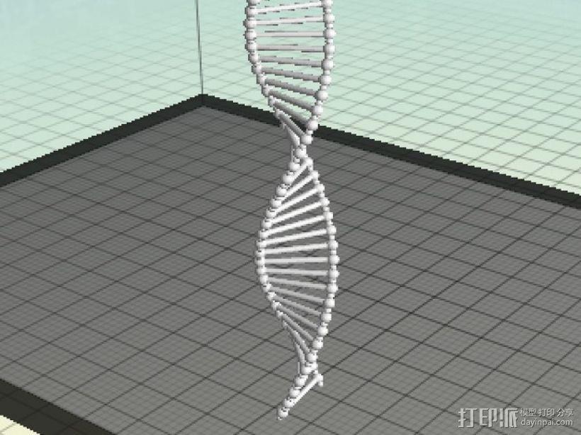 DNA双螺旋结构 3D模型  图1