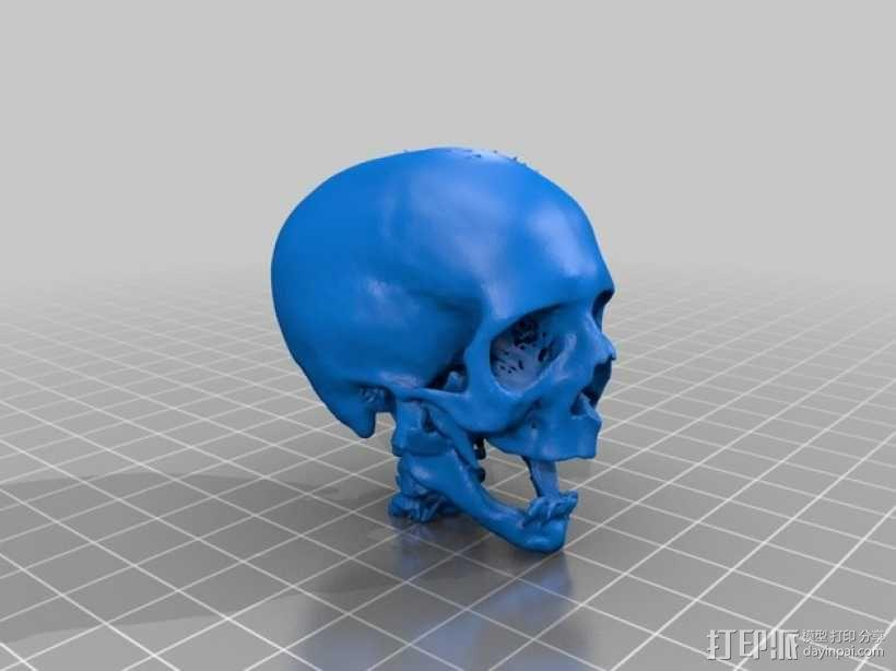 分形头骨模型 3D模型  图2
