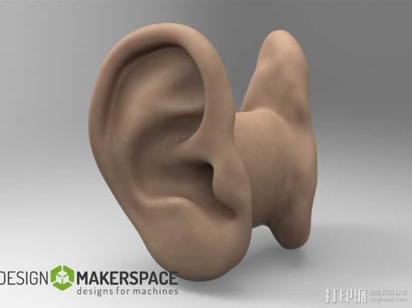 耳朵形耳机架 3D模型  图2