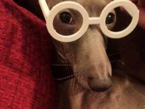 圆框眼镜 3D模型