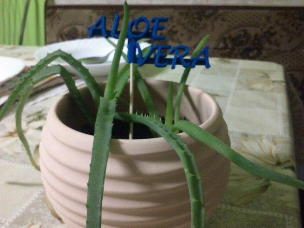 Aloevera芦荟  3D模型  图1
