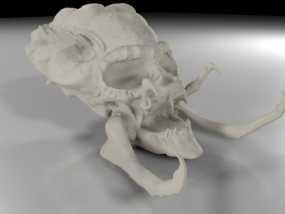 电影《铁血战士》头骨 3D模型