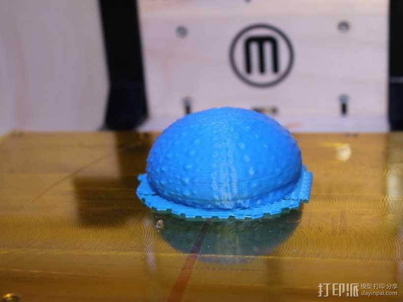 海胆 3D模型  图3