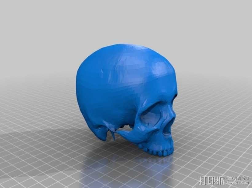 人头骨 3D模型  图3