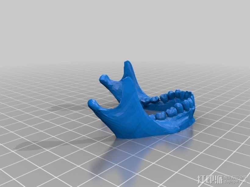 人头骨 3D模型  图5