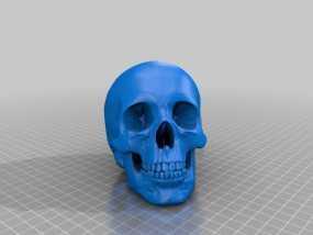 人头骨 3D模型