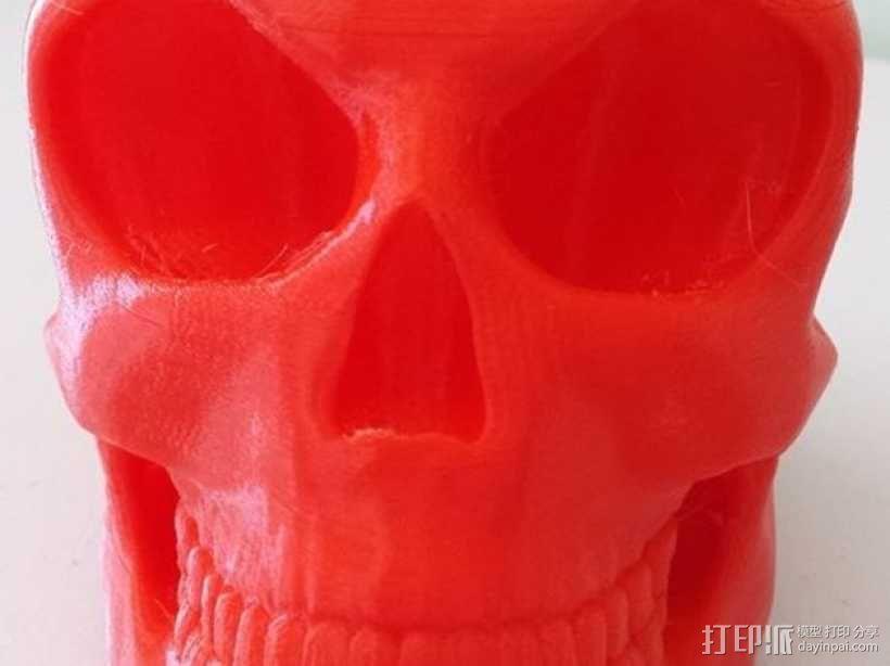 头骨 模型 3D模型  图1