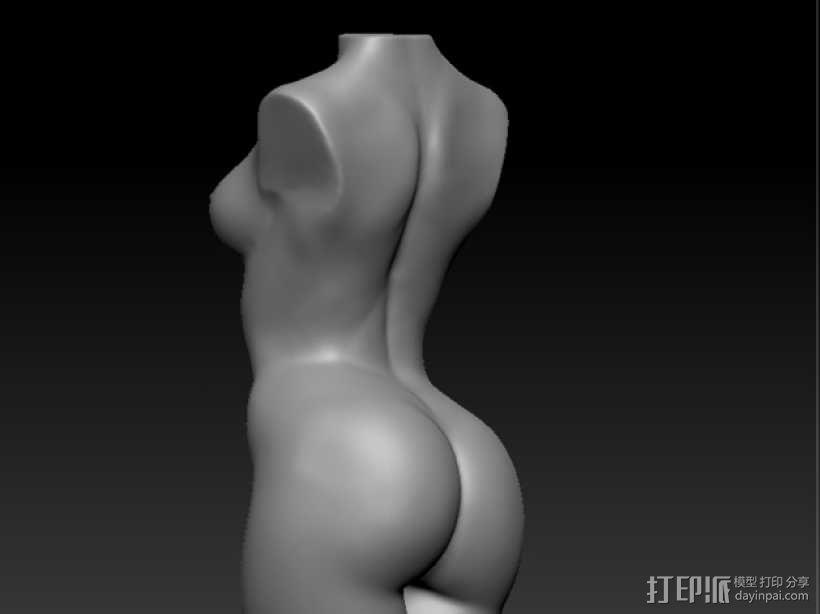 人体躯干 模型 3D模型  图2