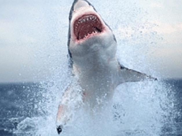 大白鲨 模型 3D模型  图7