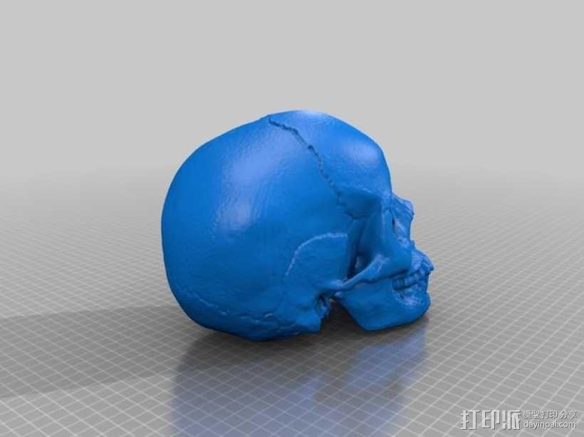 解剖形 头骨3D模型下载,解剖形 头骨在线预览 打印派