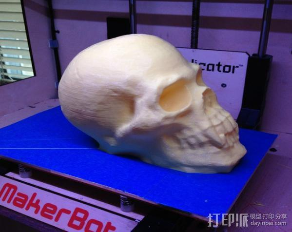 带着尖牙的骷髅 3D模型  图2