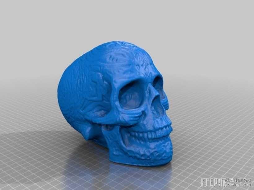 凯尔特头骨 3D模型  图2