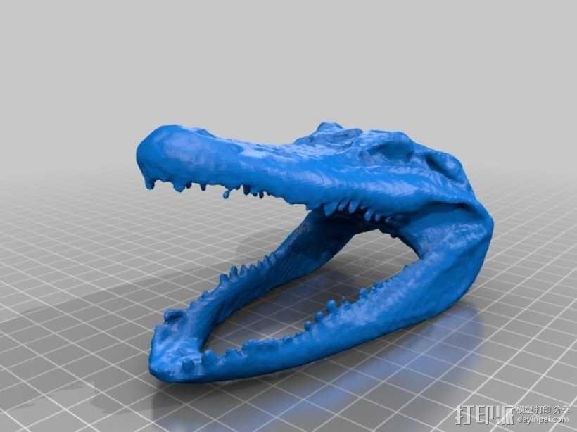 短吻鳄 鳄鱼头 3D模型  图1