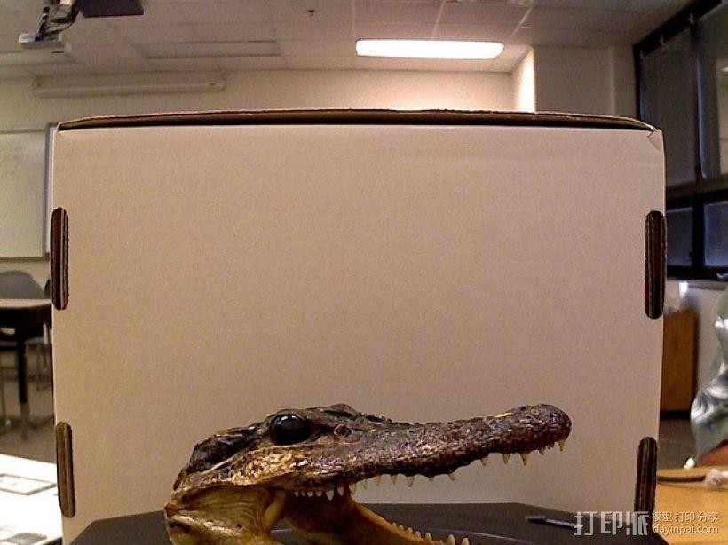 短吻鳄 鳄鱼头 3D模型  图2