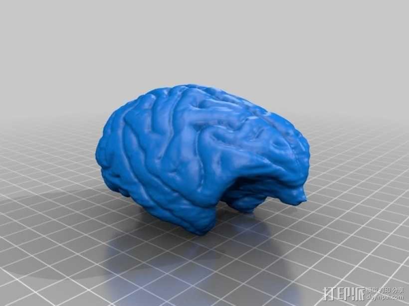 灵长类动物大脑 3D模型  图1