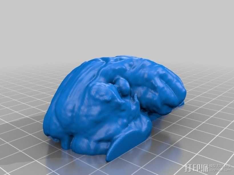 灵长类动物大脑 3D模型  图2