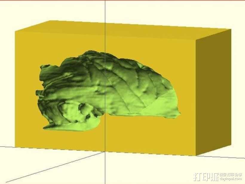 灵长类动物大脑 3D模型  图5