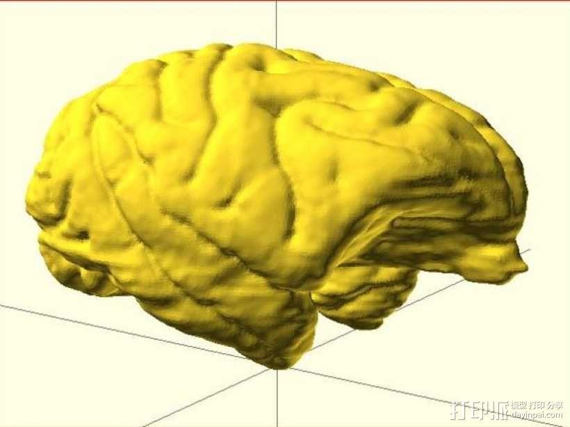 灵长类动物大脑 3D模型  图4