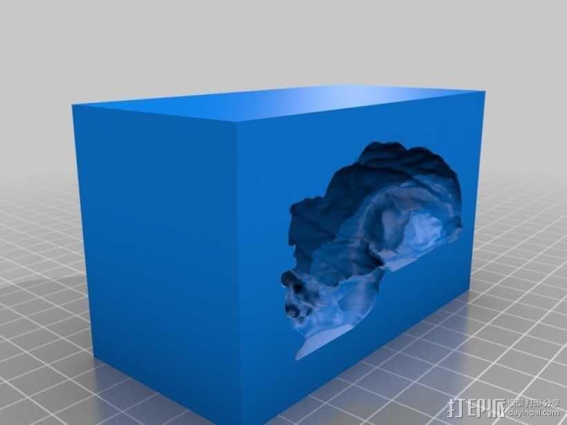 灵长类动物大脑 3D模型  图7