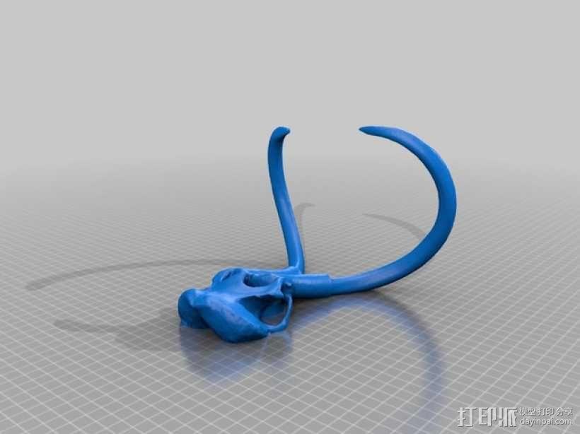 长毛象头骨模型 3D模型  图2