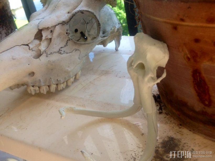 长毛象头骨模型 3D模型  图6