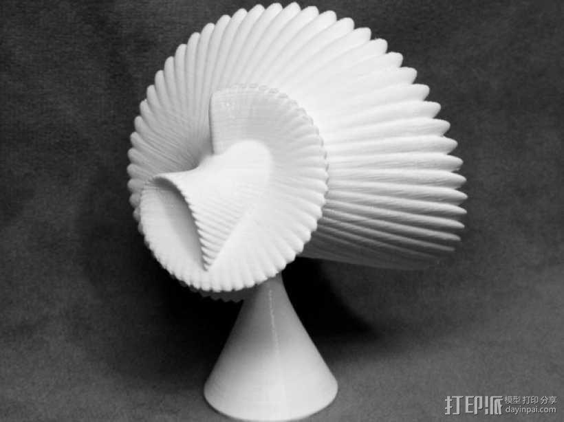 贝壳花 3D模型  图1