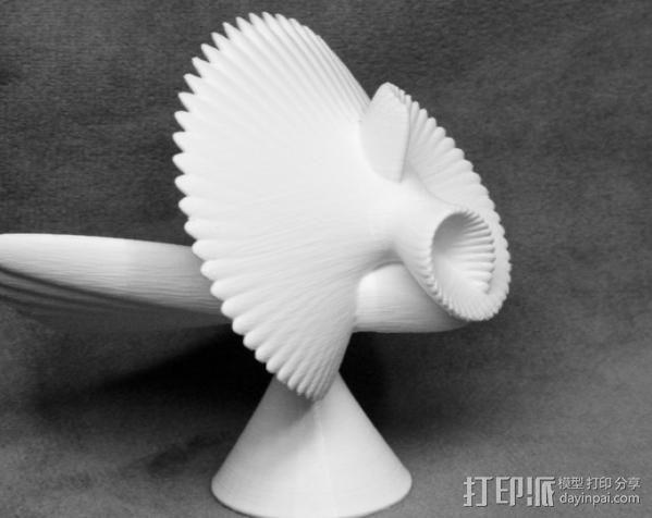 贝壳花 3D模型  图2