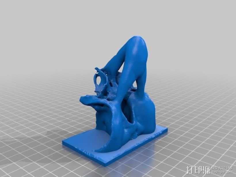 太平洋鼠鲨软骨颅模型 3D模型  图2