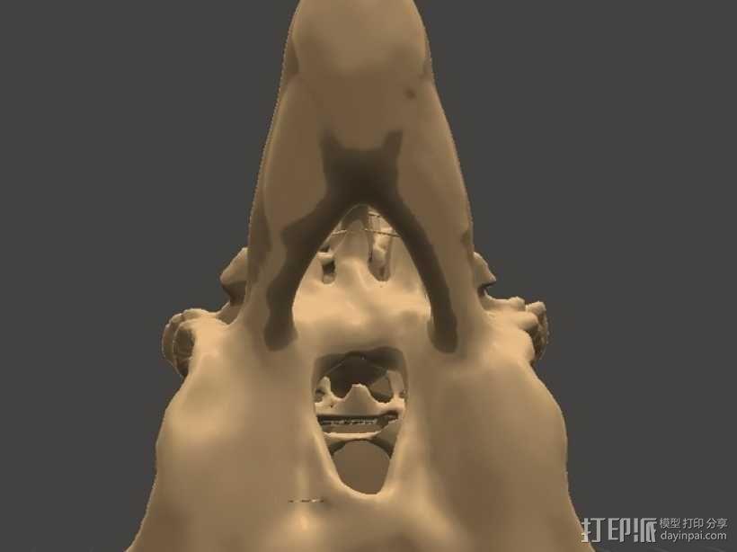 太平洋鼠鲨软骨颅模型 3D模型  图5