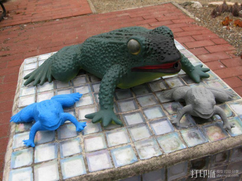 花园蛙 3D模型  图1