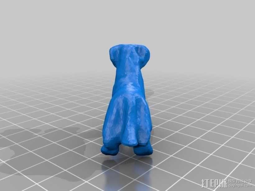 圣伯纳德犬 3D模型  图2