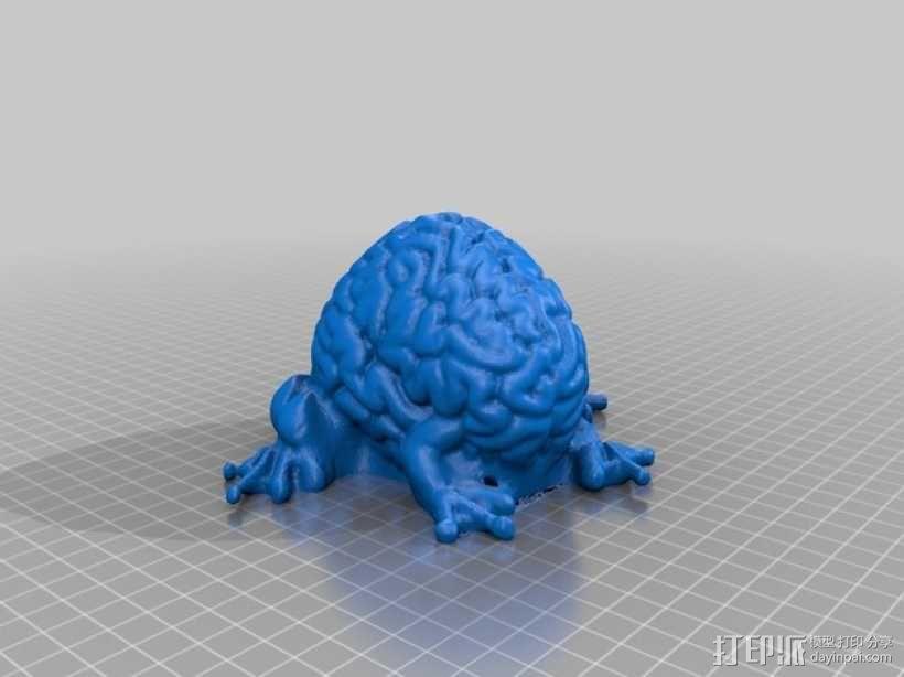 青蛙脑 模型 3D模型  图1