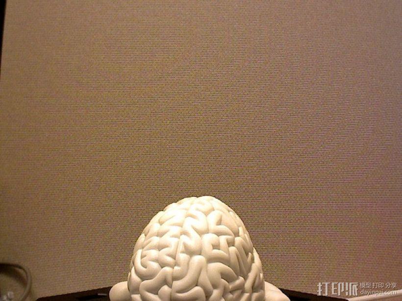 青蛙脑 模型 3D模型  图2