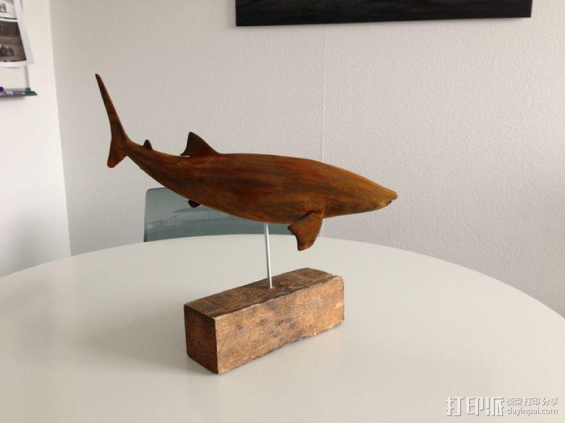 鲸鲨模型 3D模型  图1