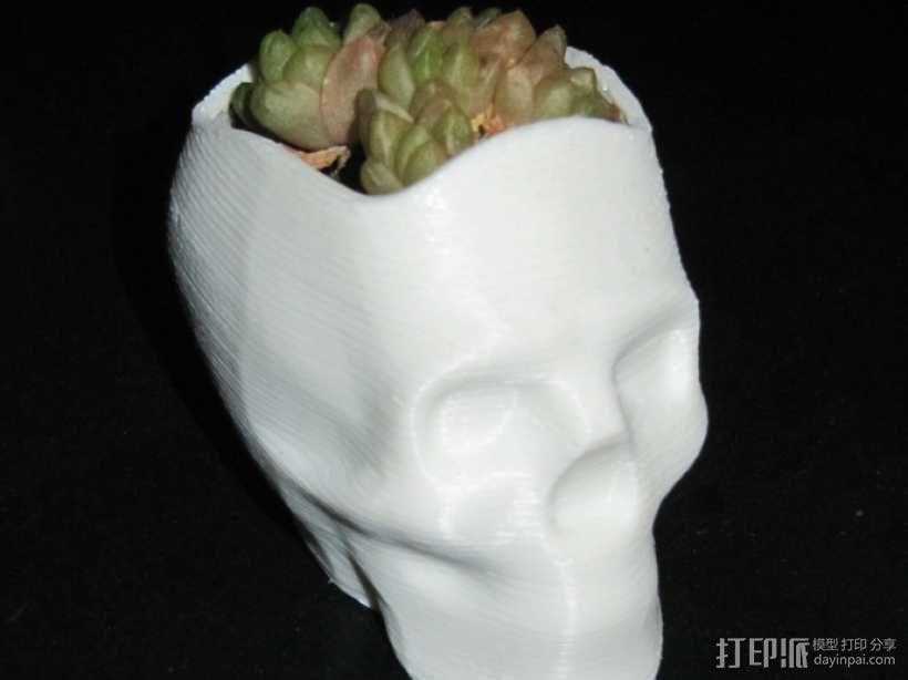 骷髅头花盆 3D模型  图1