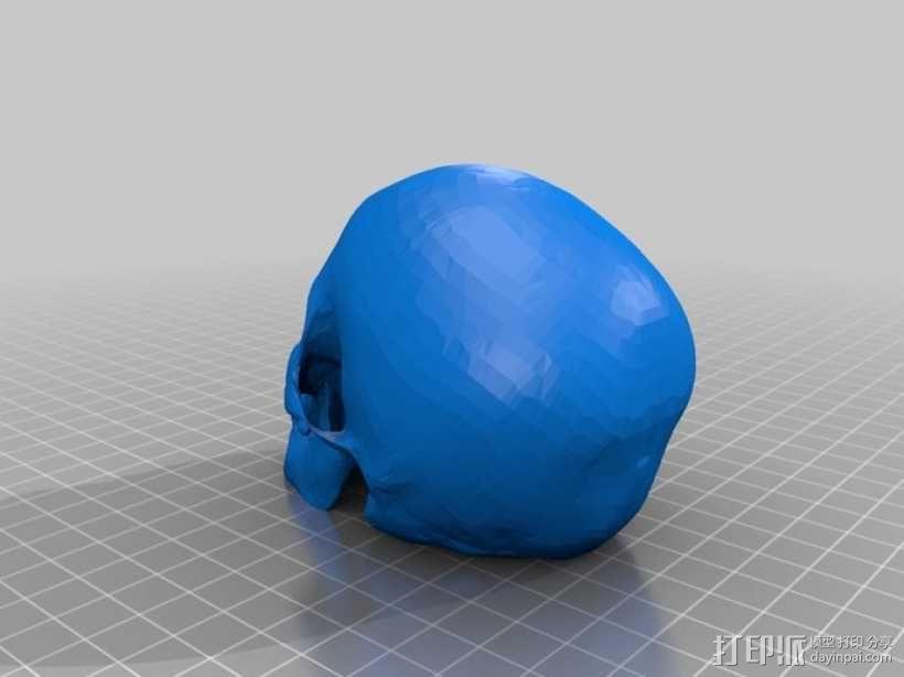 头骨模型 骷髅头 3D模型  图2