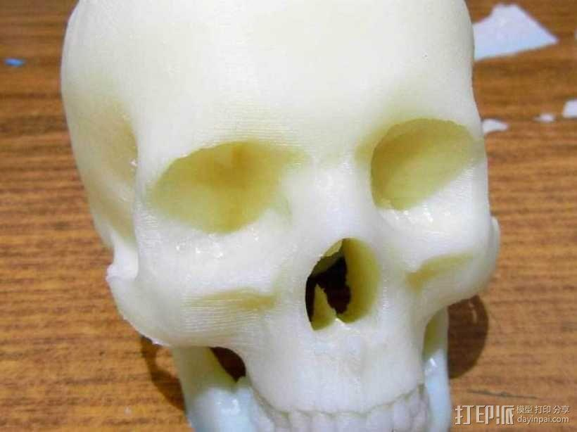 头骨模型 骷髅头 3D模型  图1
