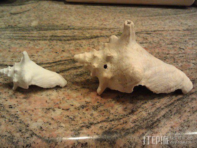 贝壳模型  3D模型  图4