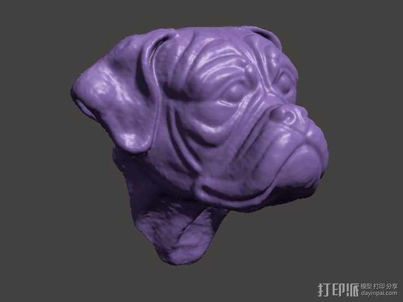 拳师犬头部模型 3D模型  图1