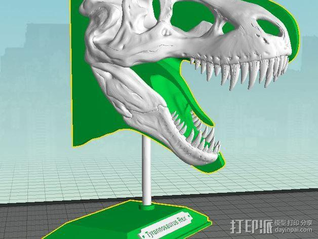 双色恐龙头骨 3D模型  图3