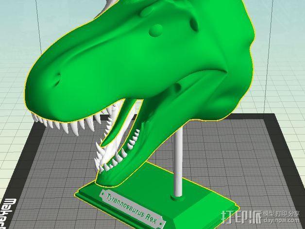 双色恐龙头骨 3D模型  图8