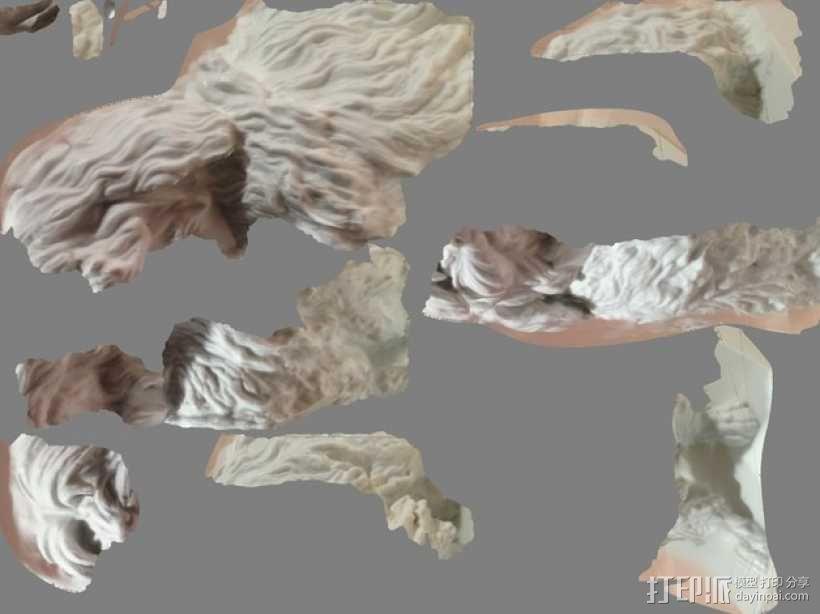 马耳他狗 3D模型  图2