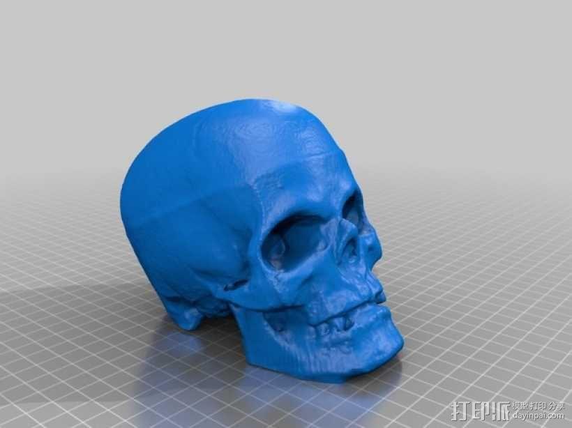 骷髅头 3D模型  图1