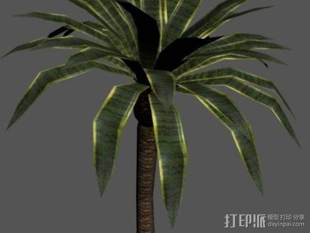 棕榈树 3D模型  图1