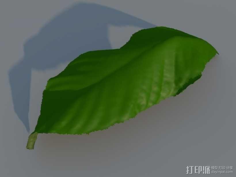 树叶 3D模型  图2