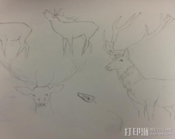 公鹿 3D模型  图1