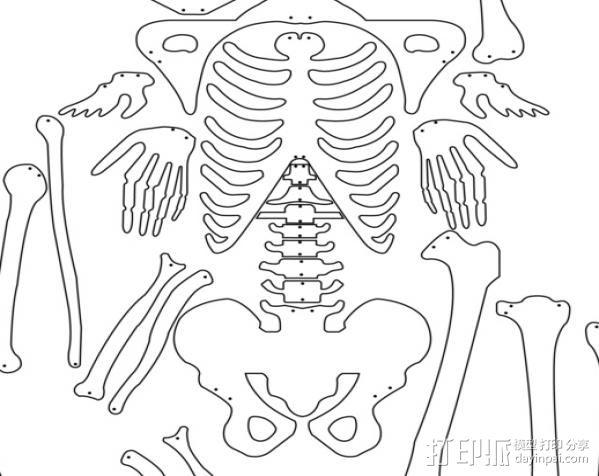 骨架 3D模型  图2
