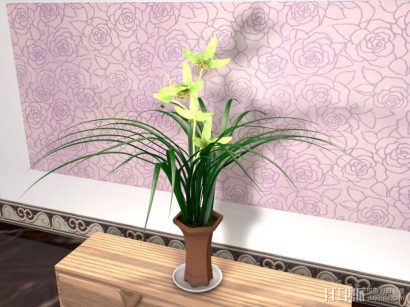 兰花 3D模型  图1