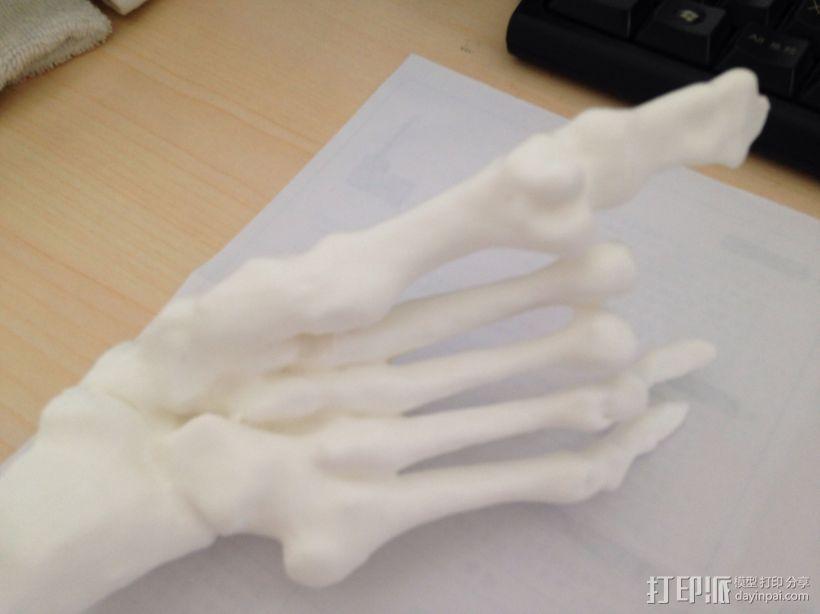 骨骼模型 3D模型  图1